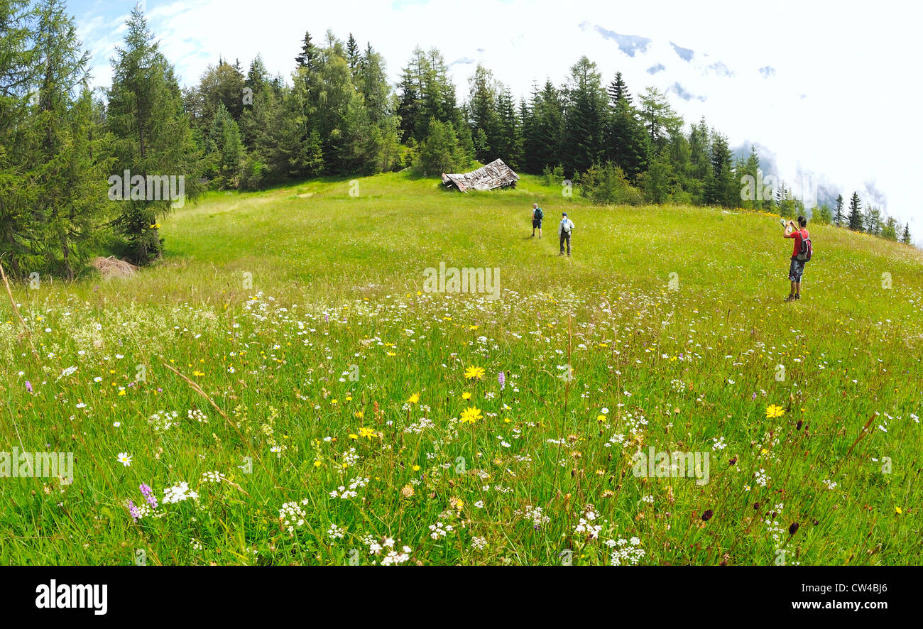 Hill walkers walking through mountain wild flower meadows in the Austrian alps. - Stock Image