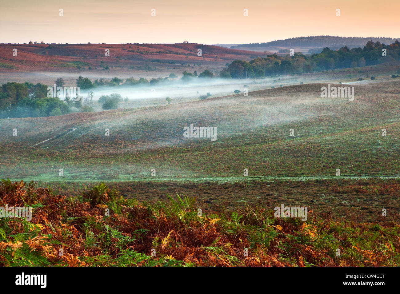 An early morning view of Rockford Common, in the New Forest National Park, in autumn with mist - Stock Image
