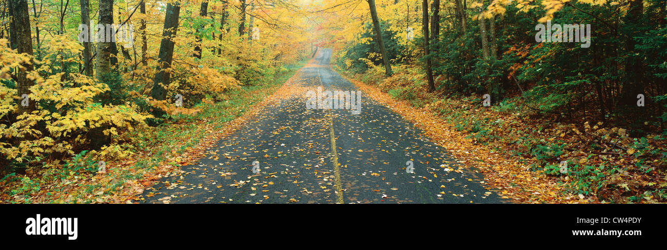 Country road, Massachussetts - Stock Image
