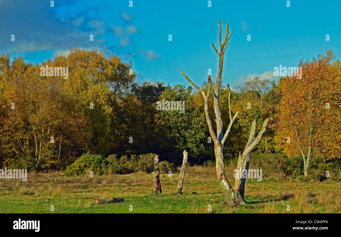 Sutton Park - Stock Image