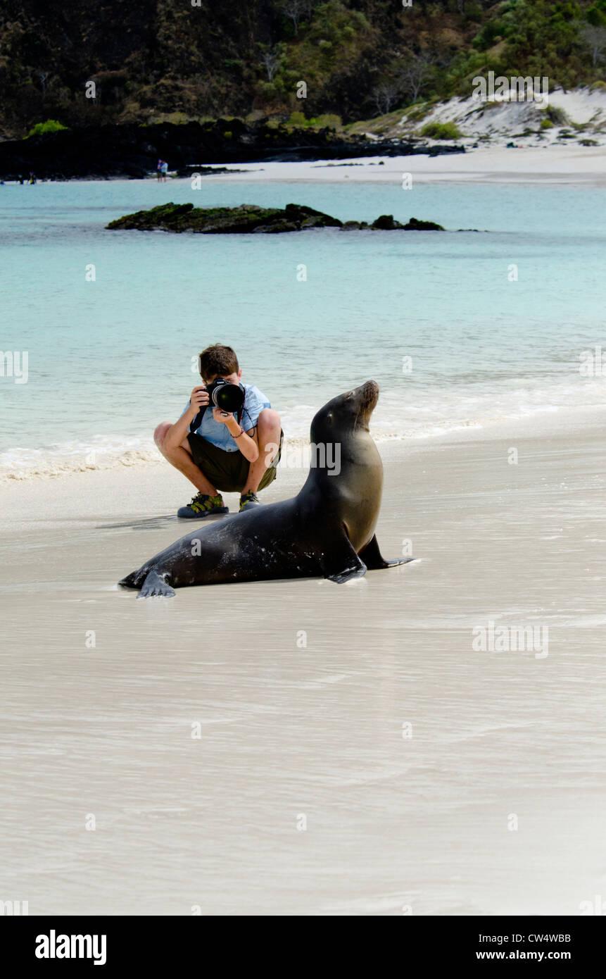 Ecuador, Galapagos, San Cristobal. Young boy taking photo of Galapagos Sea Lion (Zalophus wollebacki) on beach. - Stock Image