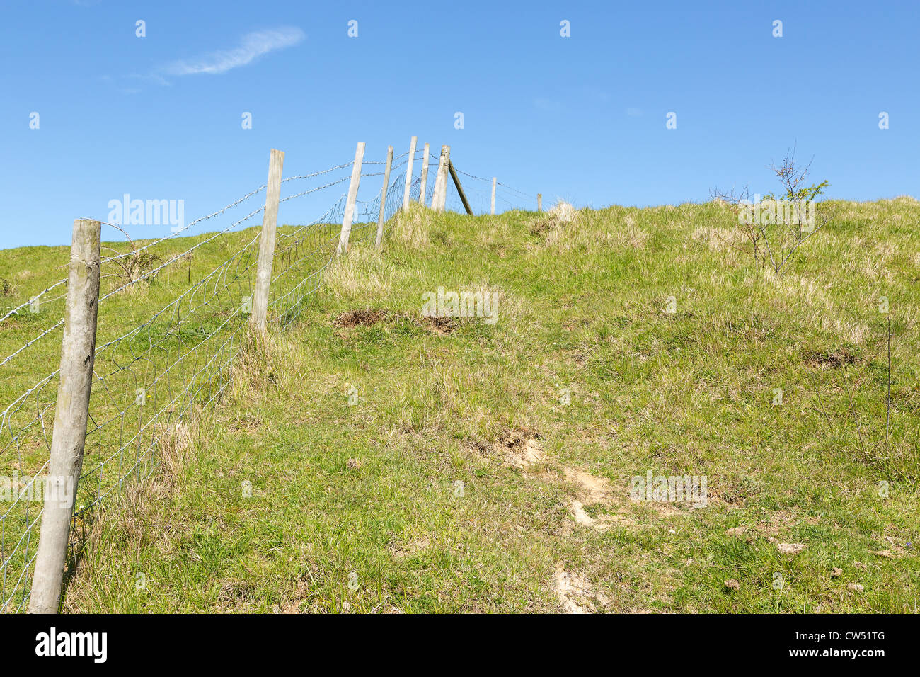 Sheep grazing field with a fence topped with barbed wire - blue sky with copy space - Stock Image