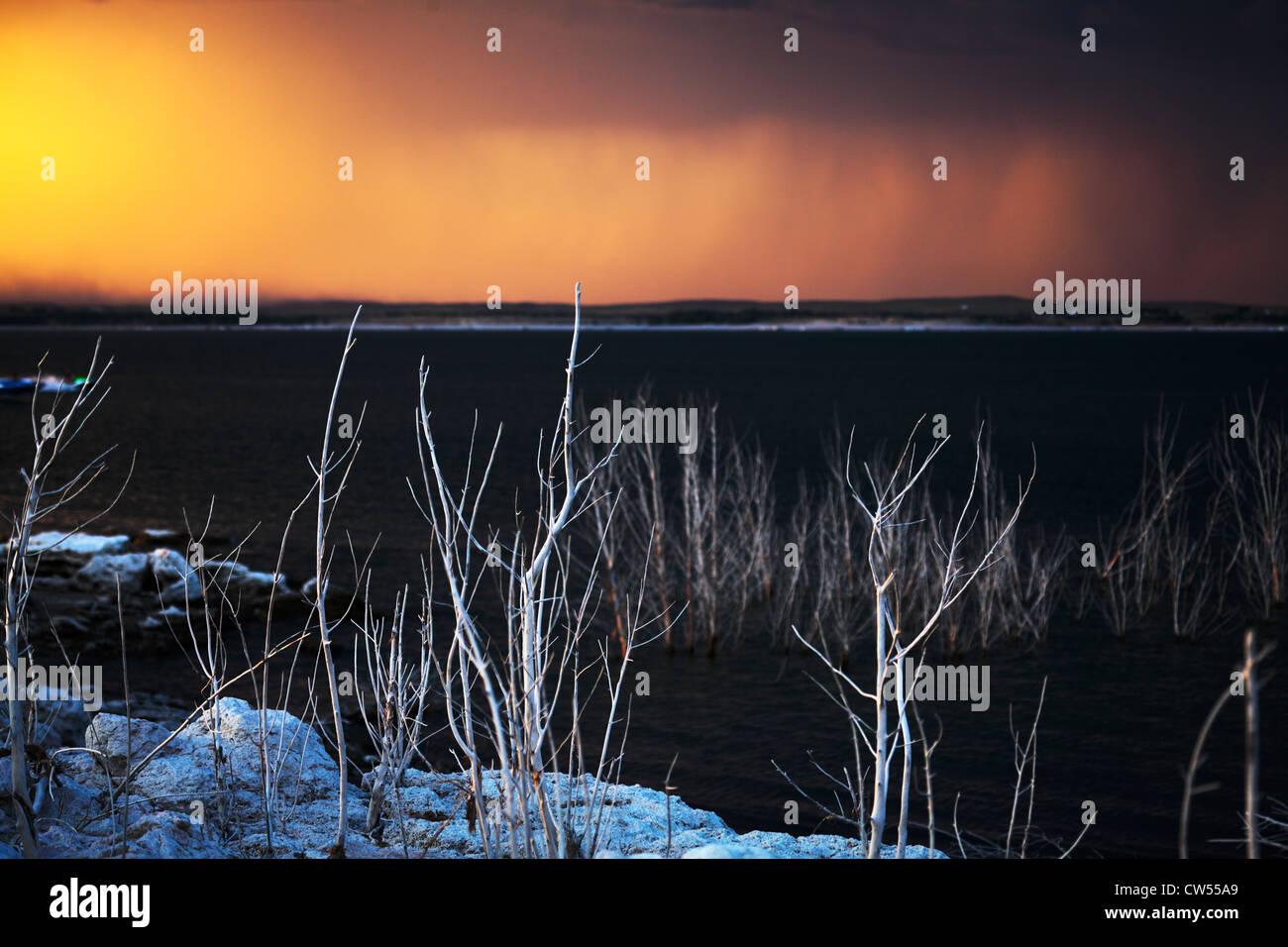 Surreal white dead trees in front of Lake McConaughy in Nebraska, as rain falls, turning the sky orange. - Stock Image