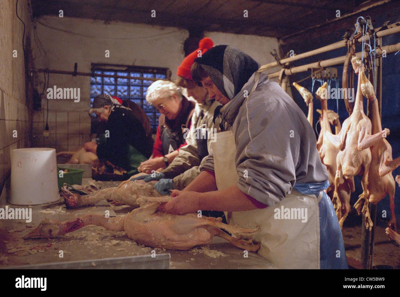 Weihnachtsgaense be exempted, Lower Saxony - Stock Image
