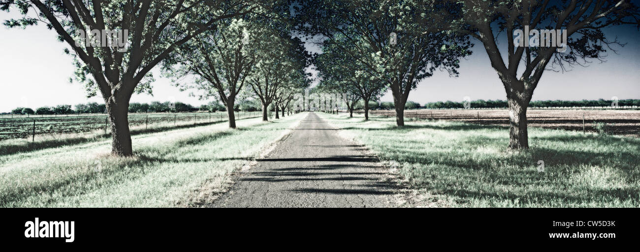 Digitally altered, high contrast image of a tree lined road outside of San Antonio, Texas - Stock Image