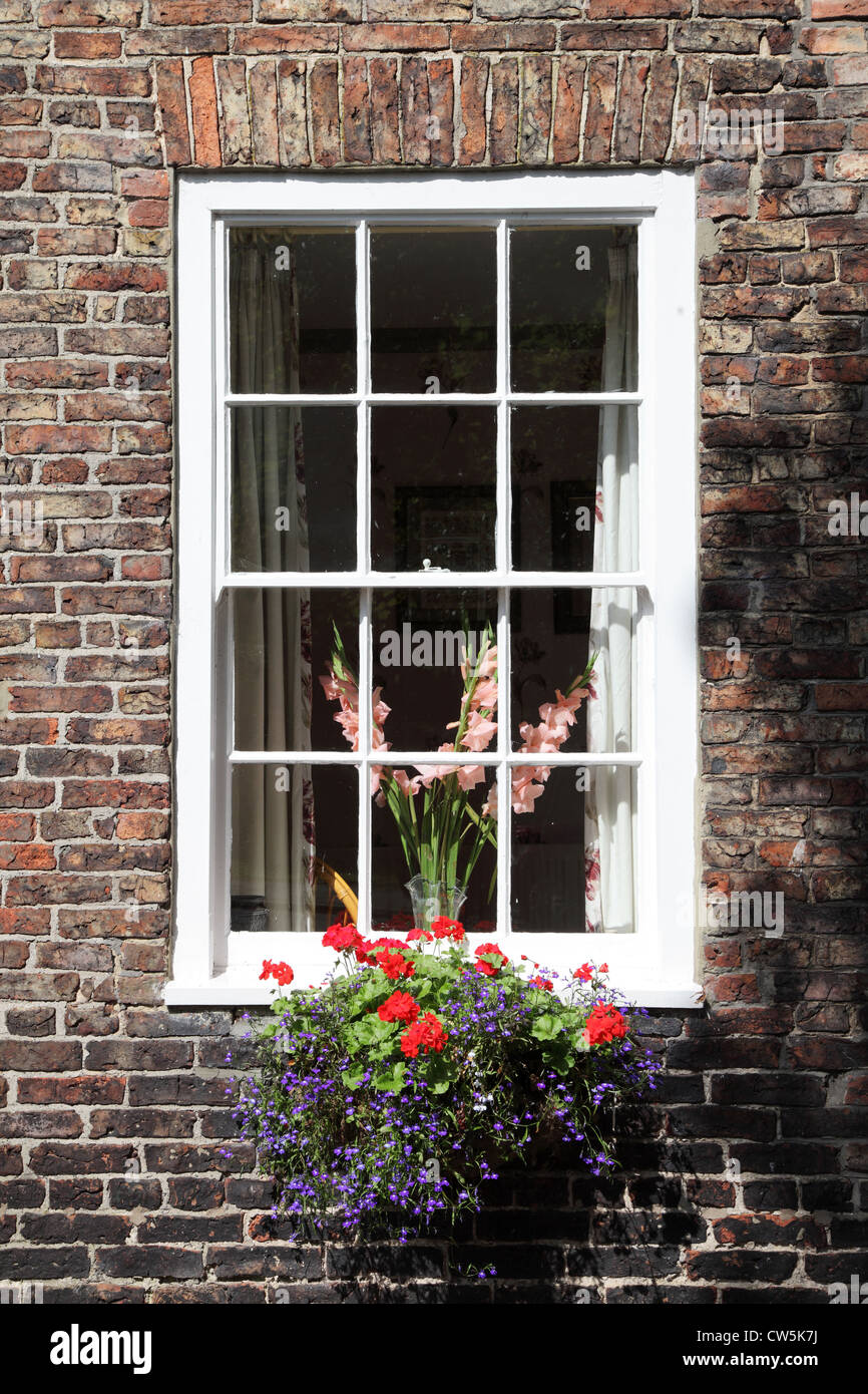 Sash window with flowers in Georgian Elm House within Sedgefield, north east England UK - Stock Image