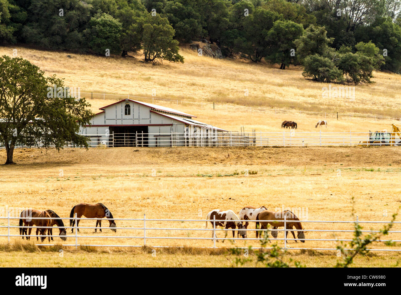 A California Horse Ranch in the foothills of the Sierra Nevada Mountains Highway 49 California's Gold Country - Stock Image