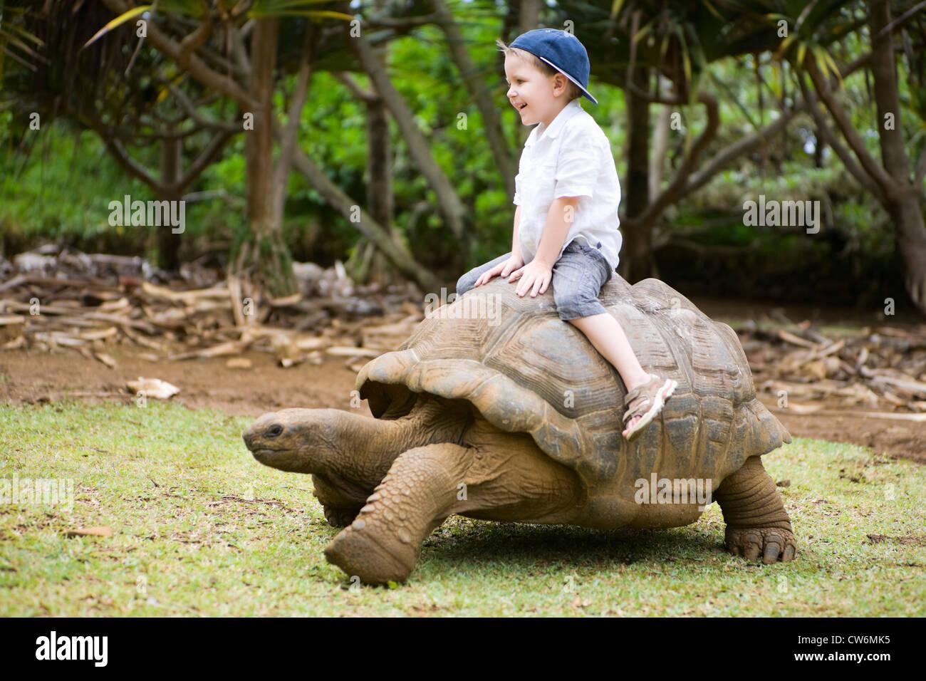 Seychelles giant tortoise, Aldabran giant tortoise, Aldabra giant tortoise (Testudo gigantea, Geochelone gigantea, - Stock Image