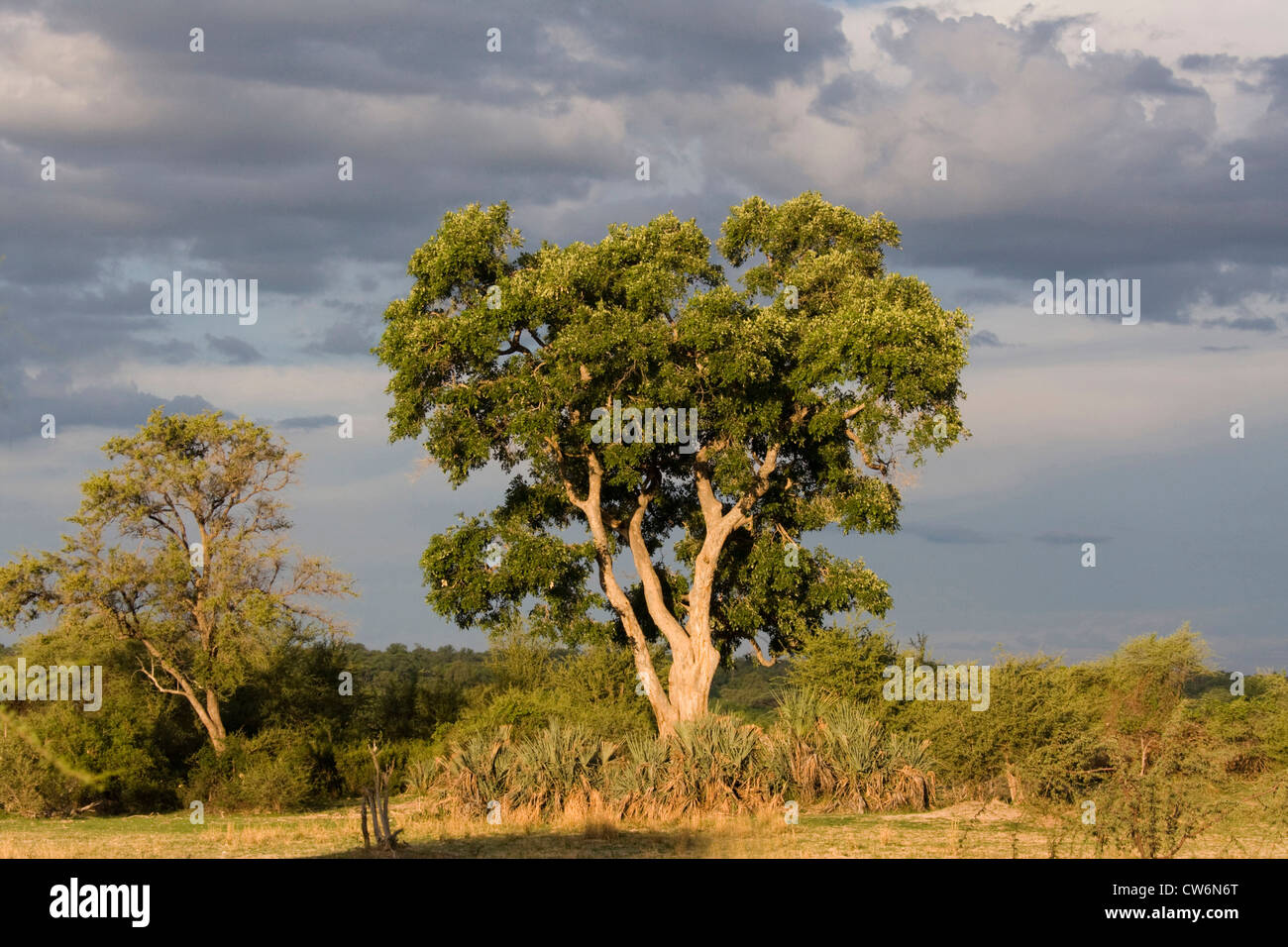 stormy atmosphere at Mahango National Park, Namibia, Caprivi, Mahango NP - Stock Image