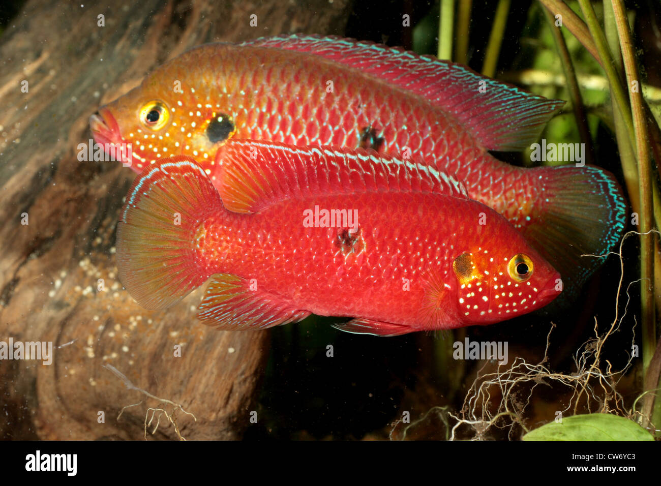 Fish Eggs Water Stock Photos & Fish Eggs Water Stock Images - Alamy