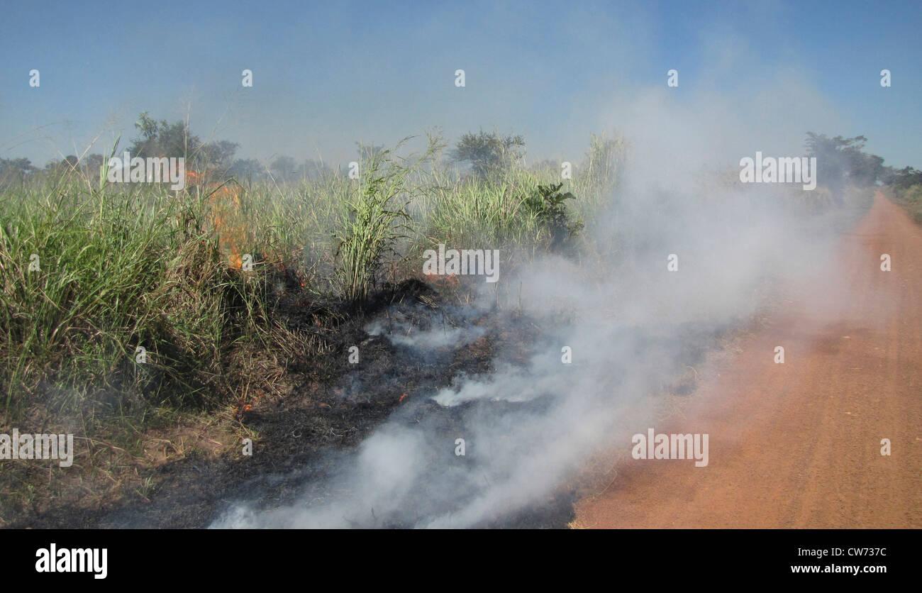 grass burning at the edge of a soil road, Uganda, Gulu, Gulu - Stock Image