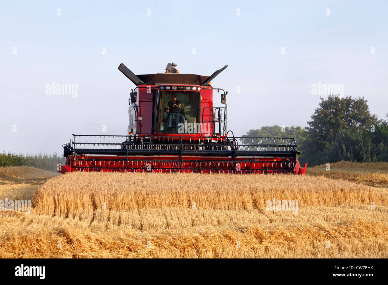 Red Case IH Axial-Flow 5088 combine harvester harvesting malting barley in a sunny late summer evening in Denmark. - Stock Image
