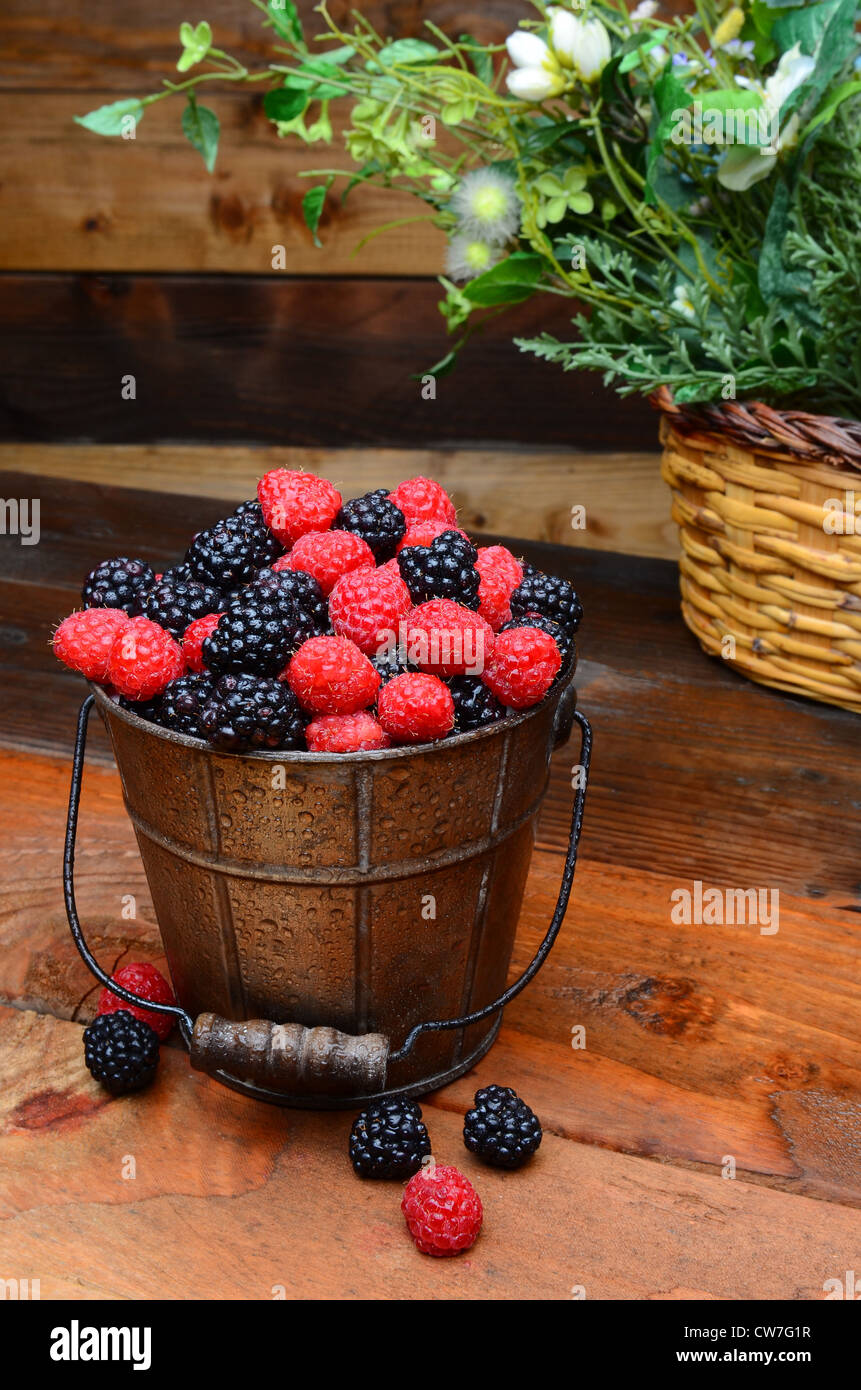 Fresh picked blackberries and raspberries in a galvanized pail on a rustic wooden table. Vertical format - Stock Image