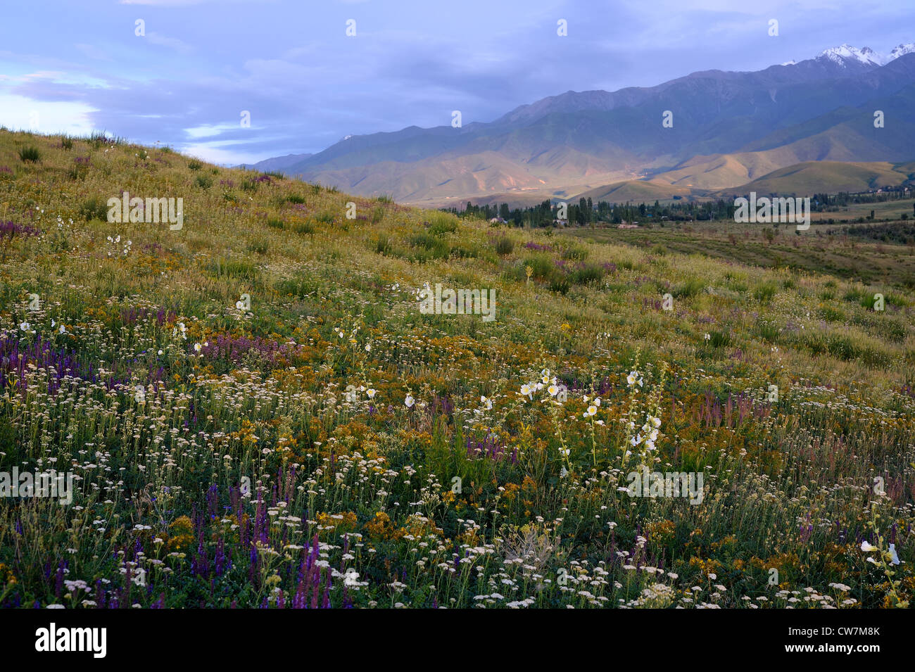 Meadow in northern Kyrgyzstan - Stock Image