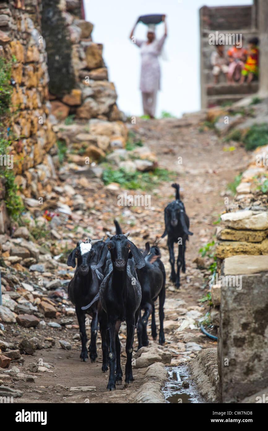 Village Goats Stock Photos & Village Goats Stock Images - Alamy