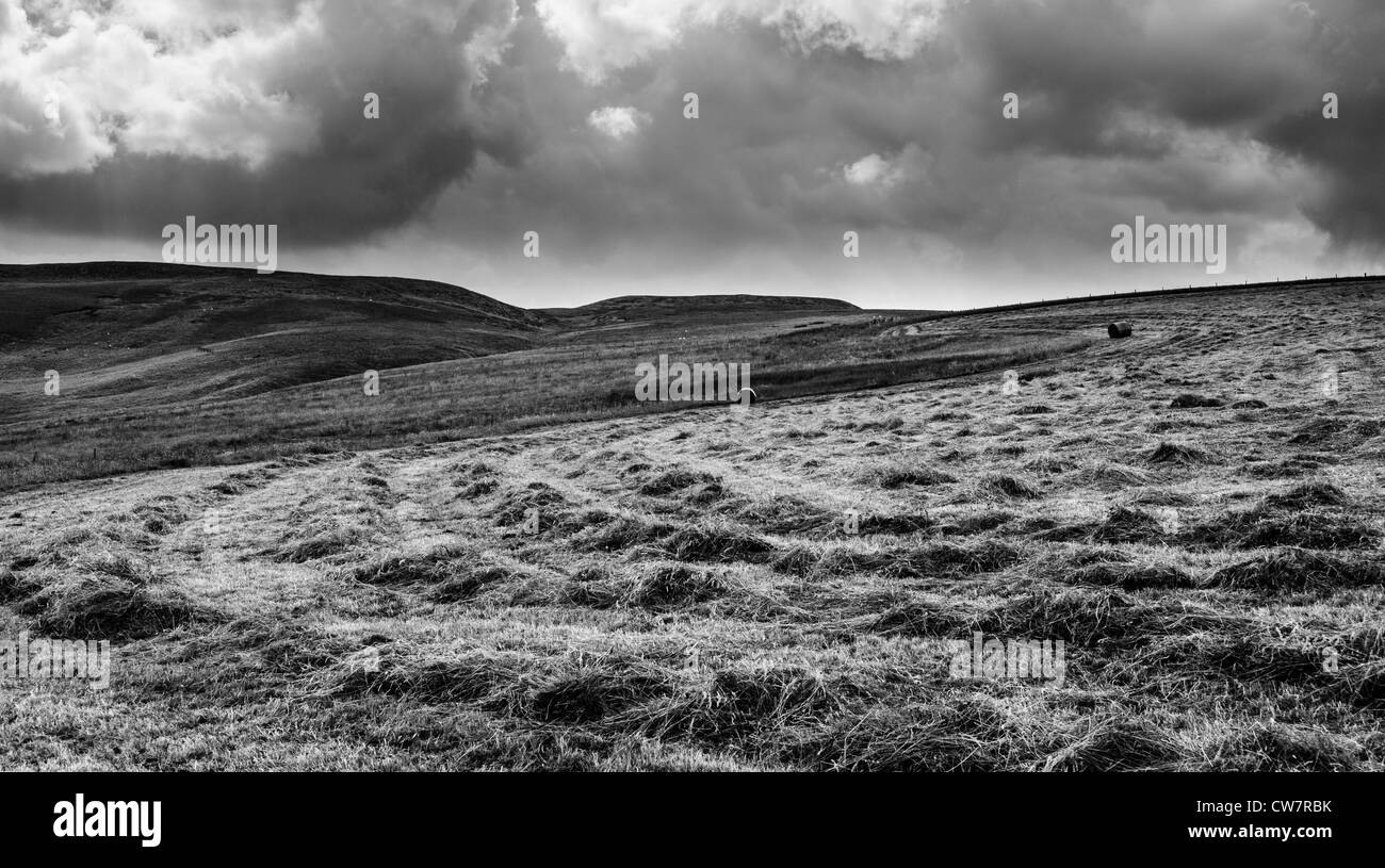 lines of cut grass waiting to be baled with tractor on horizon hay making teesdale - Stock Image
