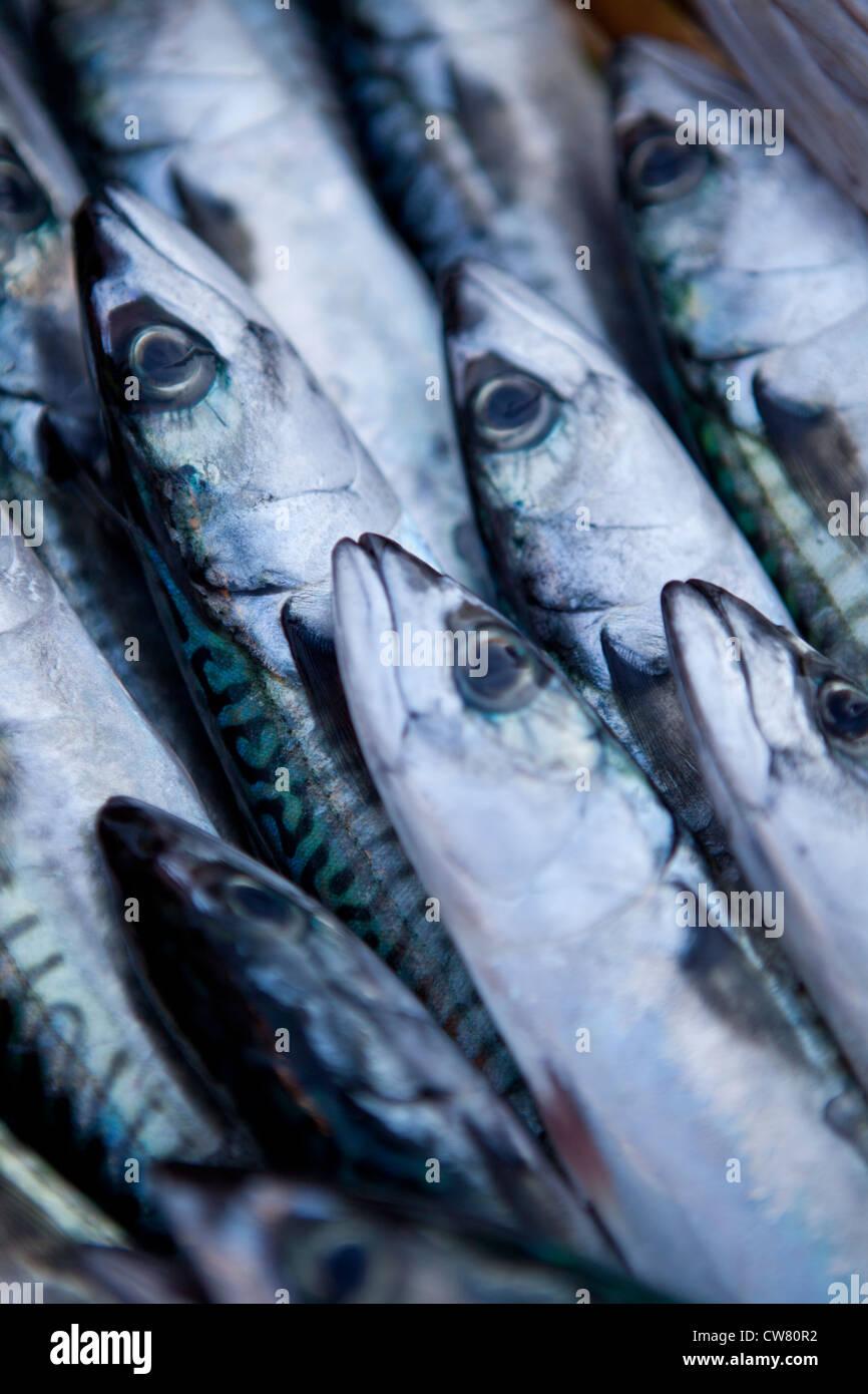 sardines, Ballaro market, Palermo, Sicily, Italy - Stock Image