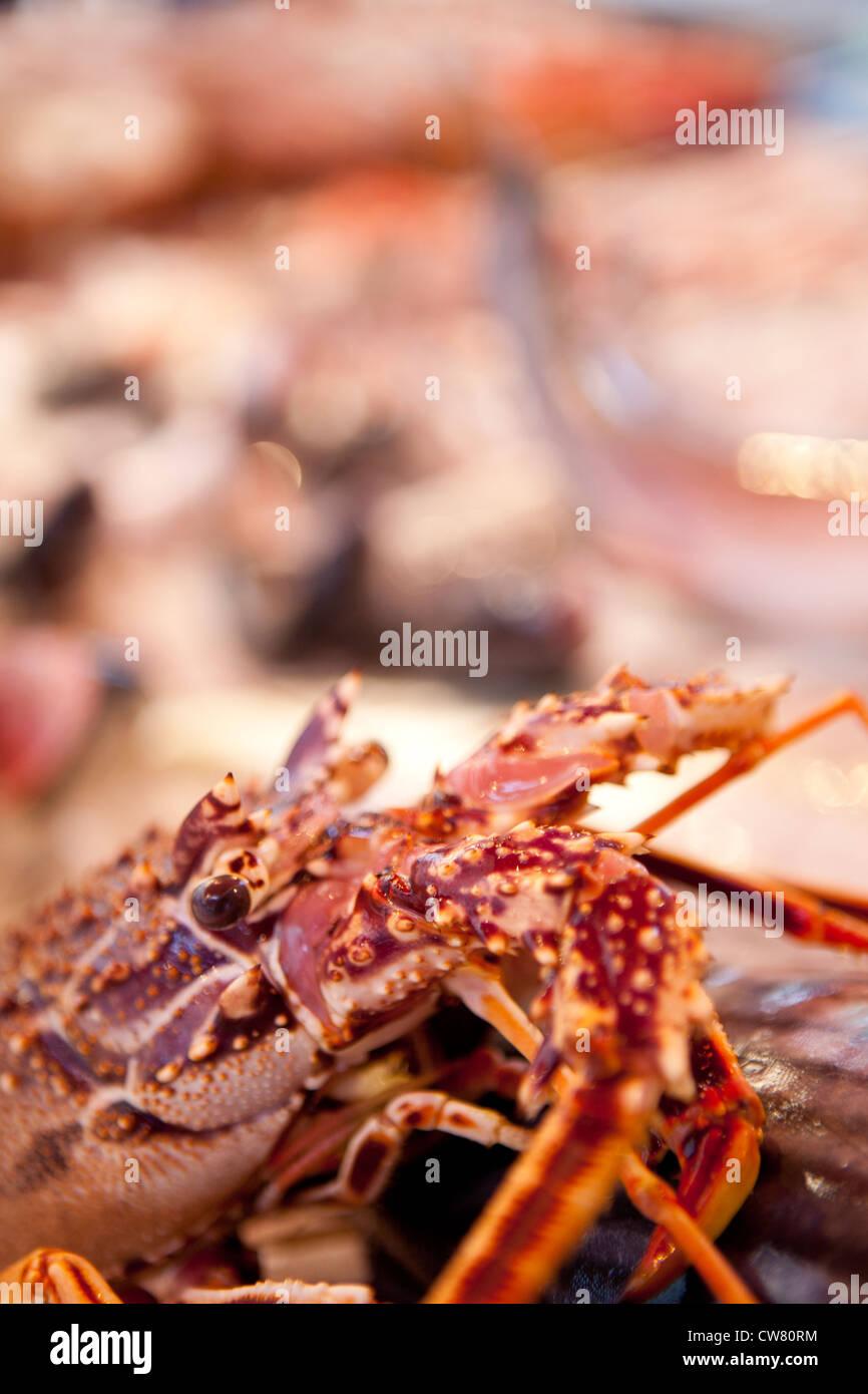 lobster, Ballaro market, Palermo, Sicily, Italy - Stock Image