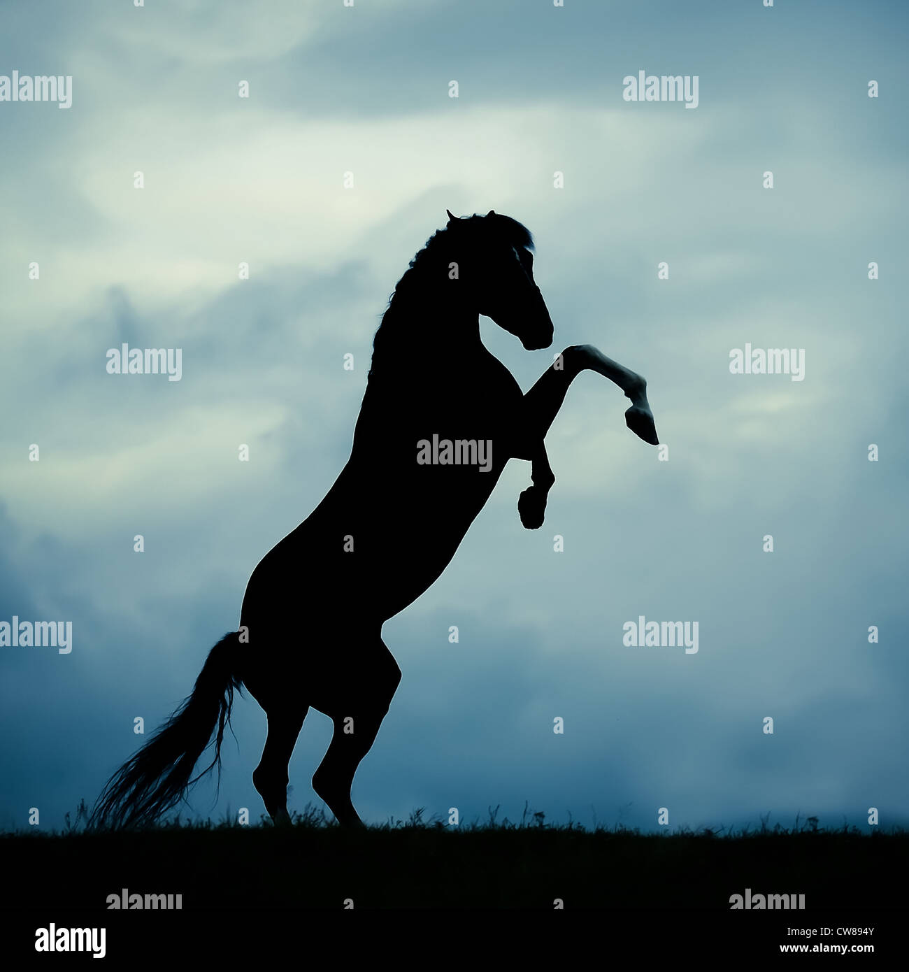 Rearing Horse Silhouette High Resolution Stock Photography And Images Alamy