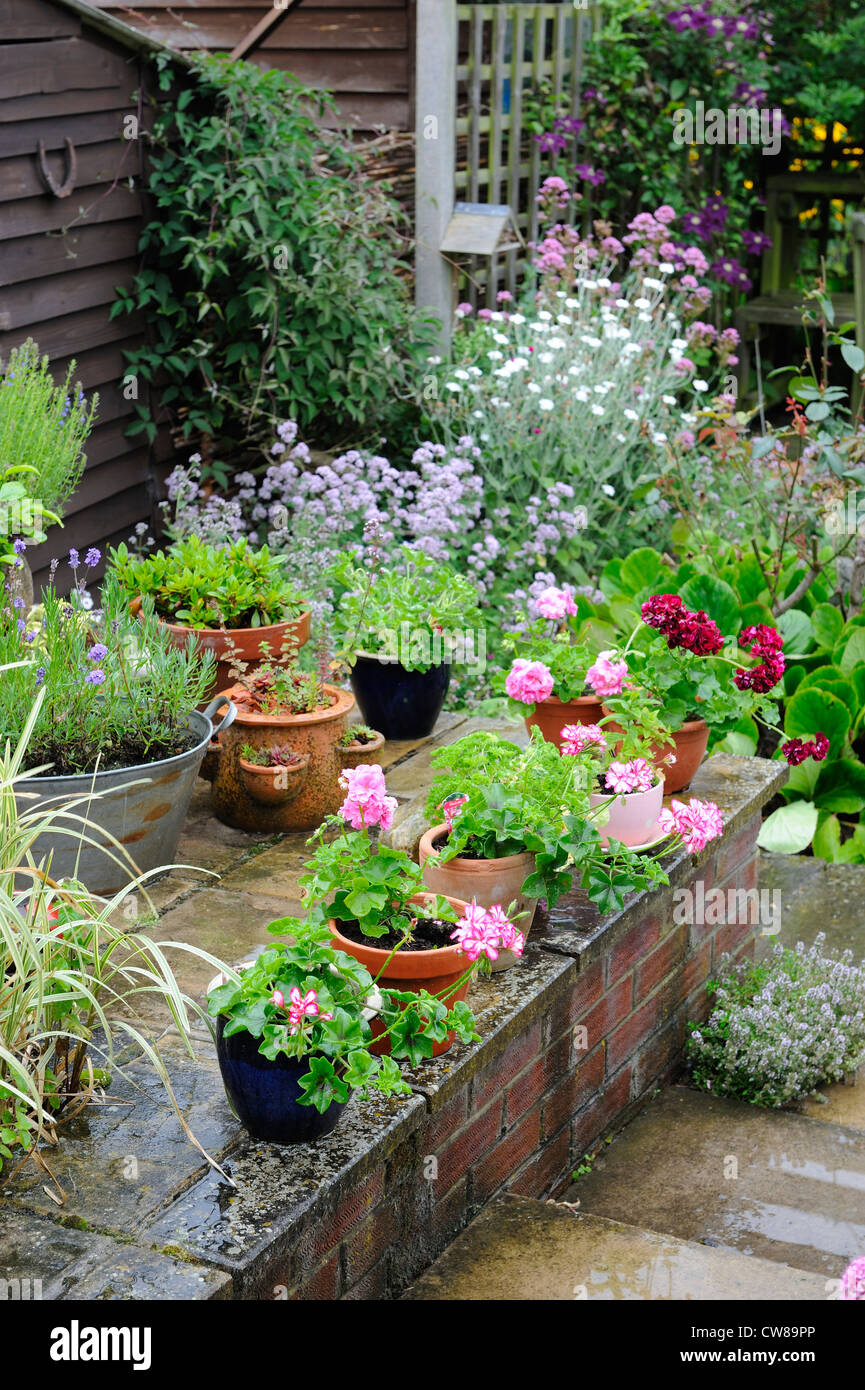 Raised Patio With Steps: Small Garden With Raised Patio Area With Pots Of Geraniums