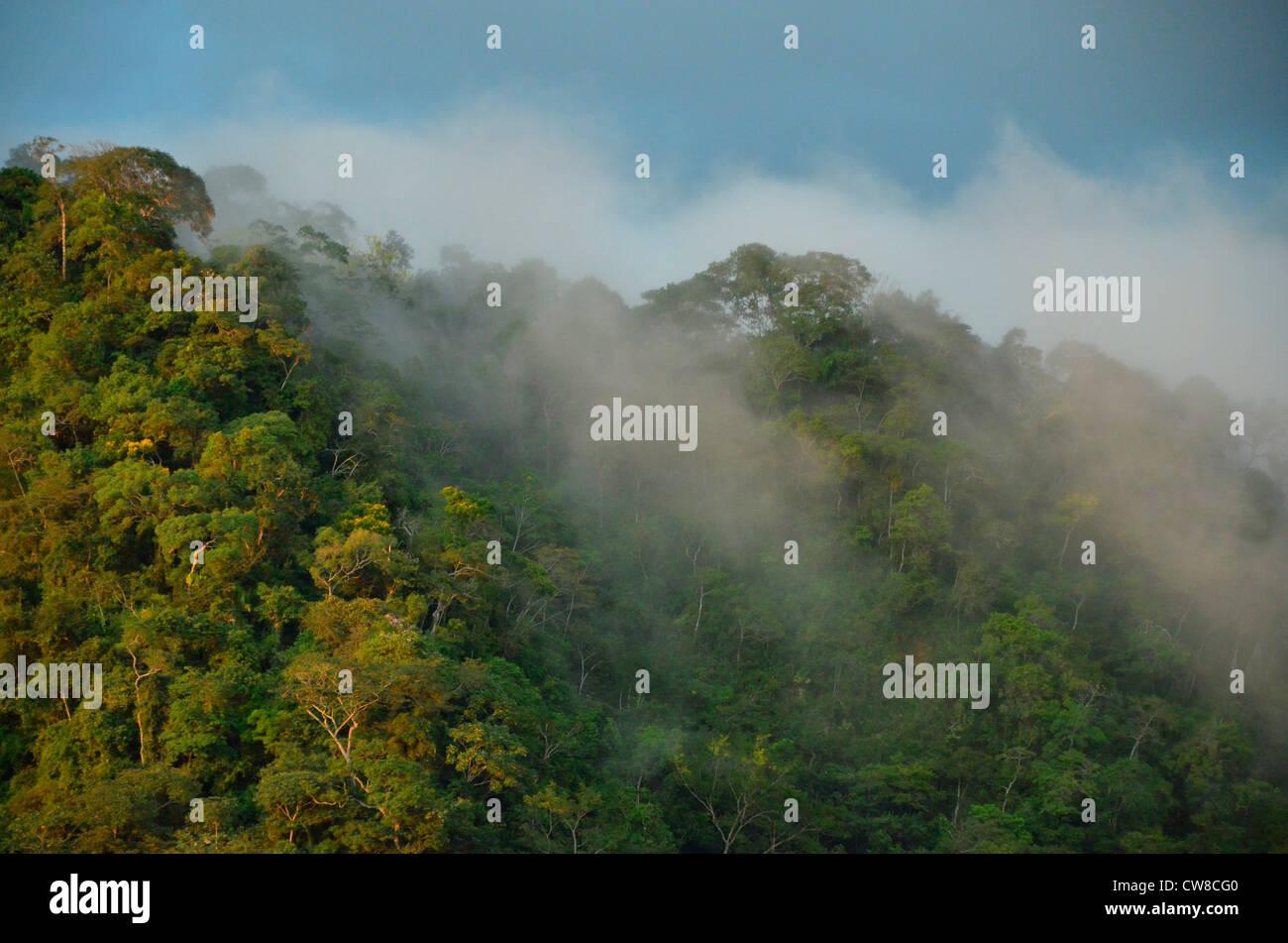 Rurrenabaque, Beni river, Bolivia. Amazon jungle and cloud forest - Stock Image