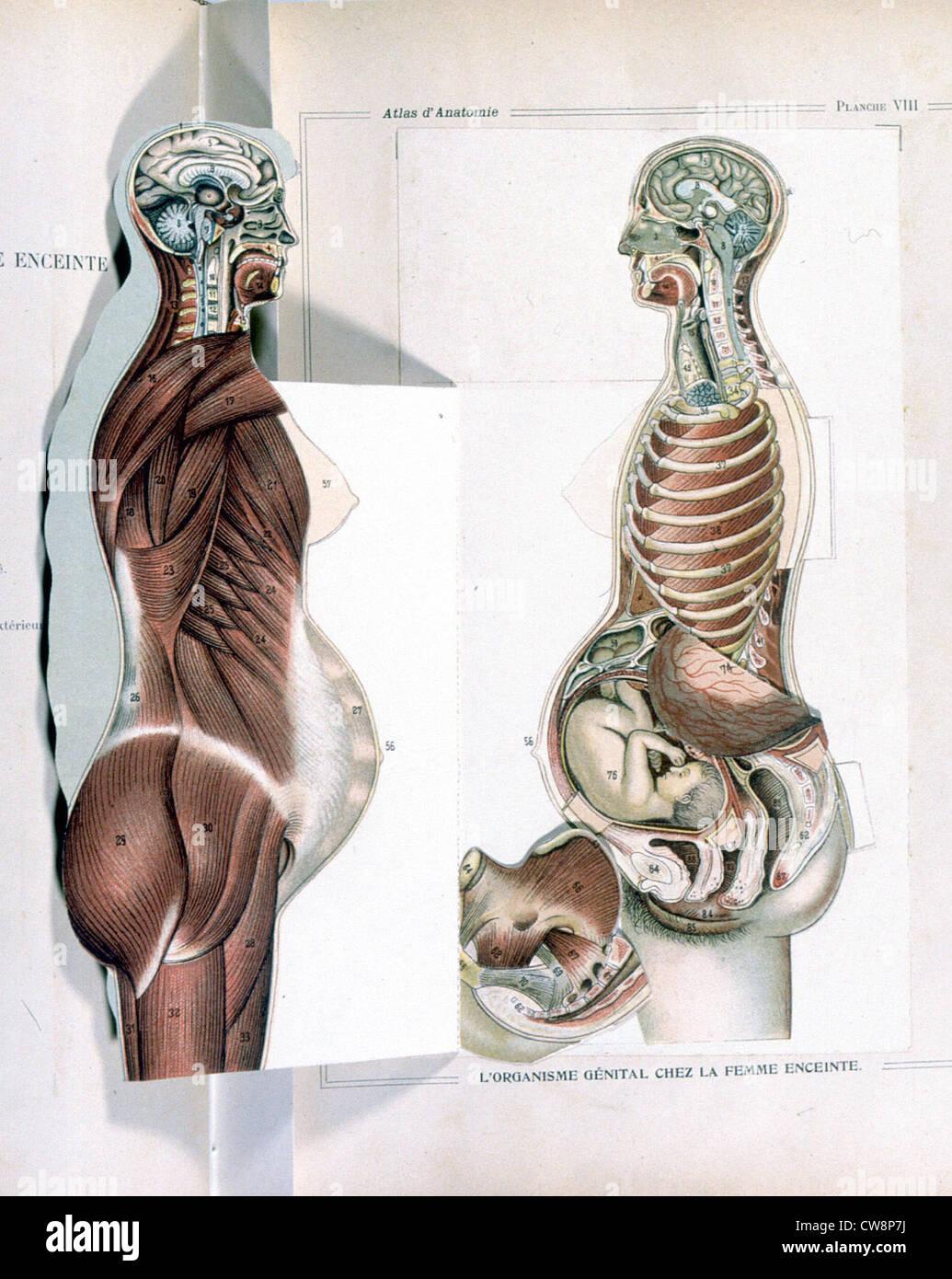 Anatomy Female Genital Organs Sciences Stock Photos & Anatomy Female ...