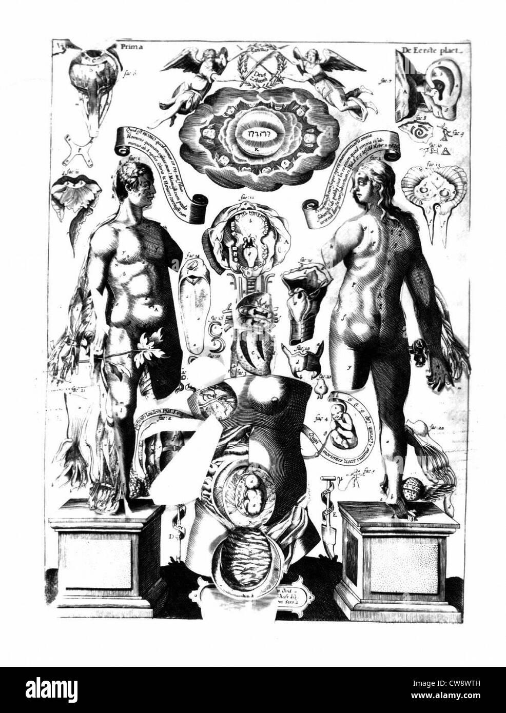 Female anatomy - Stock Image