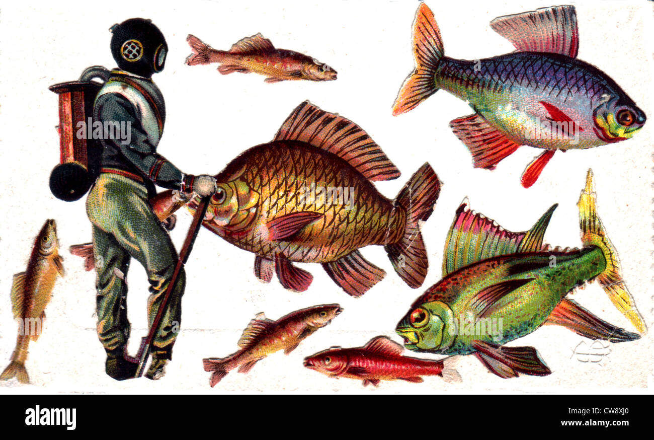 Collage: underwater diver and fish - Stock Image