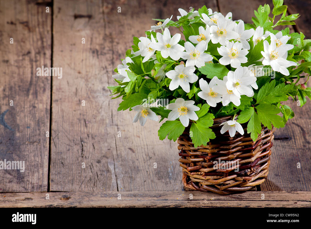 Bouquet of spring flowers - wood anemones on a rustic background - Stock Image