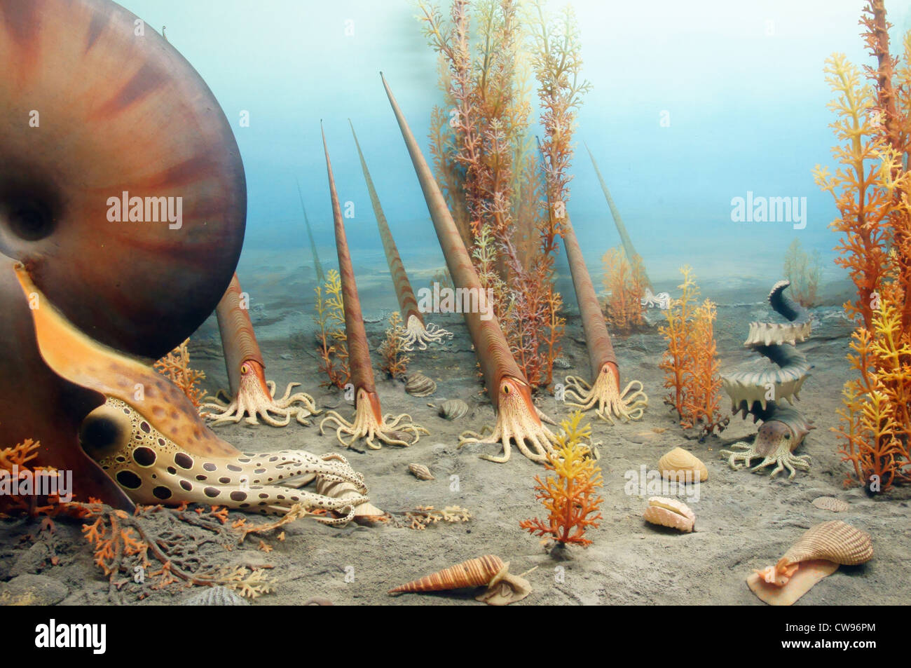 exhibit vegetation wildlife evolution plant plants organisms cretaceous period 144 65 million years ago - Stock Image