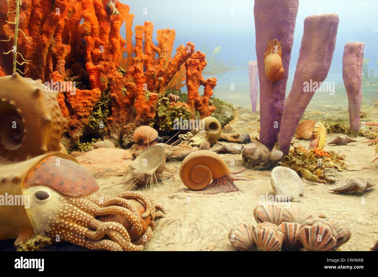 exhibit vegetation wildlife evolution plant plants organisms pennsylvanian period 320 286 million years ago - Stock Image