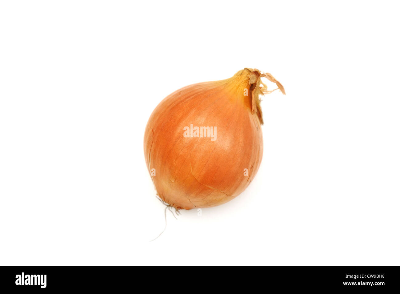 a cooking onion - Stock Image