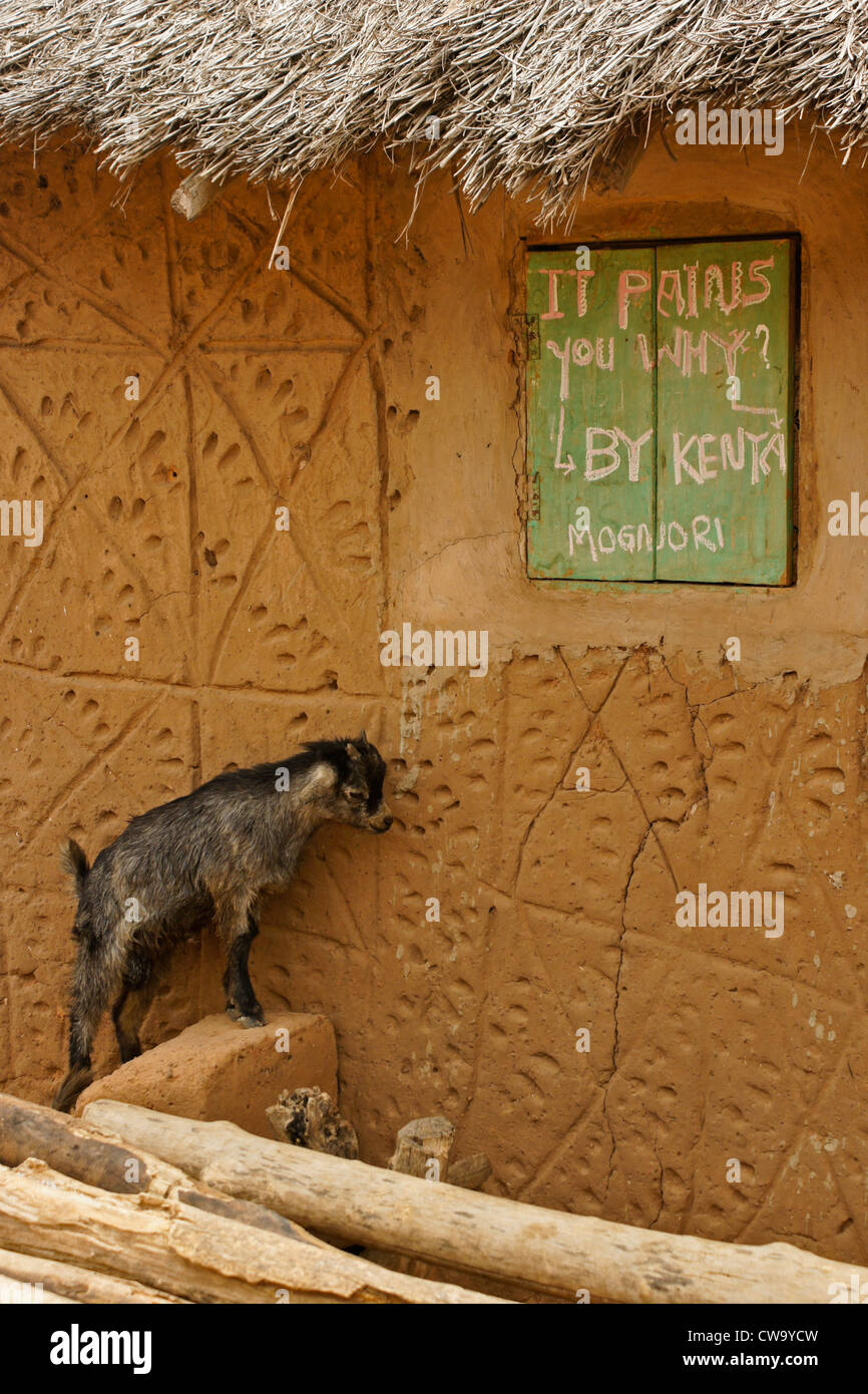 Baby goat and exterior of home in Mognori Eco-Village, Ghana - Stock Image