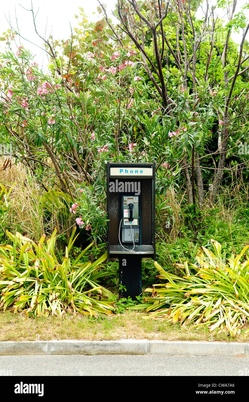 Payphone in tropical plants - Stock Image