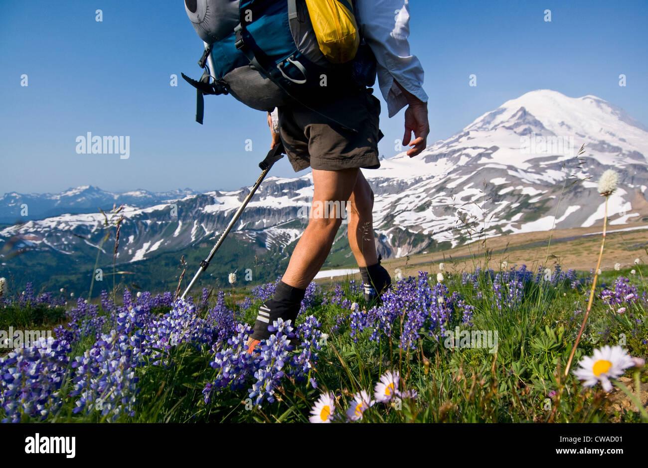 Female backpacker on Cowlitz Divide, Mount Rainier National Park, Washington, USA - Stock Image
