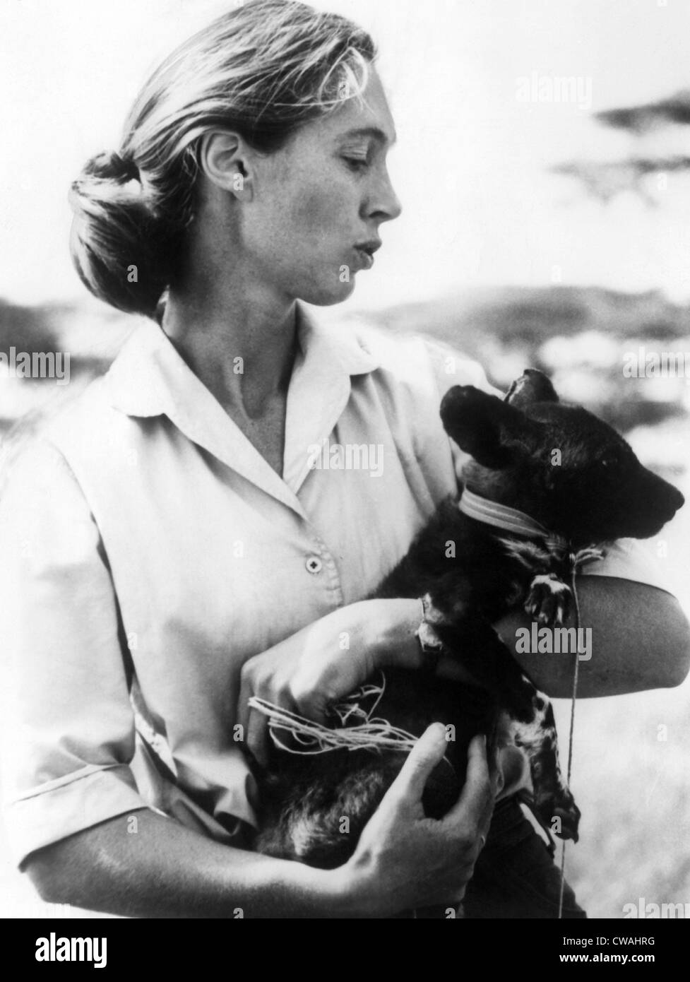 Jane Goodall. ca 1970s. Courtesy: CSU Archives/Everett Collection - Stock Image