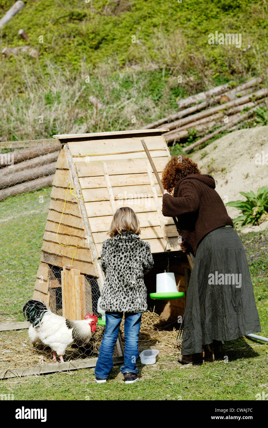 Young girl and grandmother tending to chickens, Wales. - Stock Image