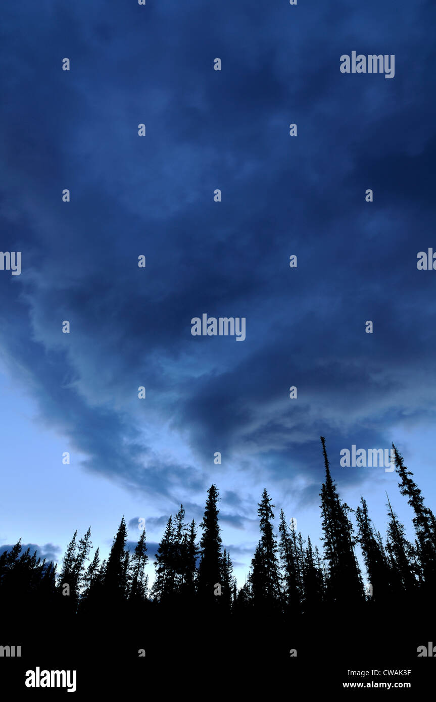 Cloudy sky and trees in silhouette, Silverhorn Creek, Banff National Park, Alberta, Canada - Stock Image