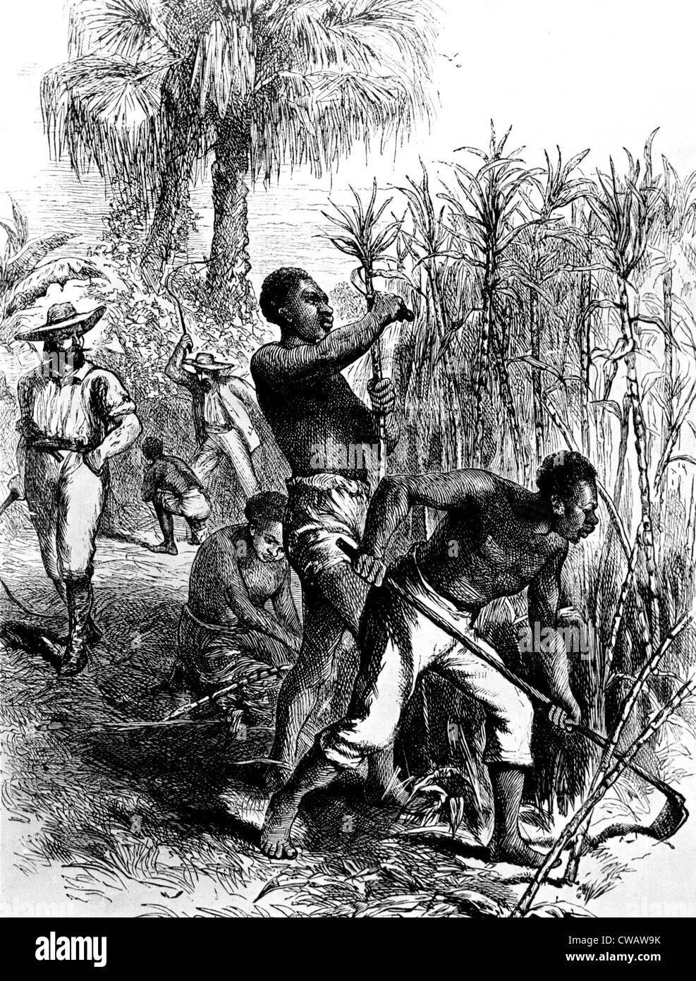 Slaves harvesting sugar cane. Courtesy: CSU Archives / Everett Collection Stock Photo