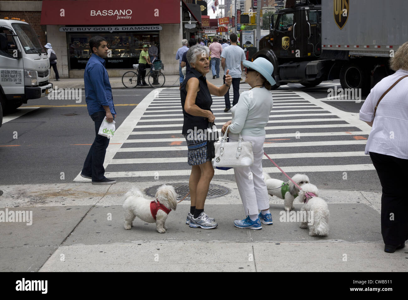 Two older New Yorkers chat on Lexington Avenue at 57th St. with poodles in toe. - Stock Image