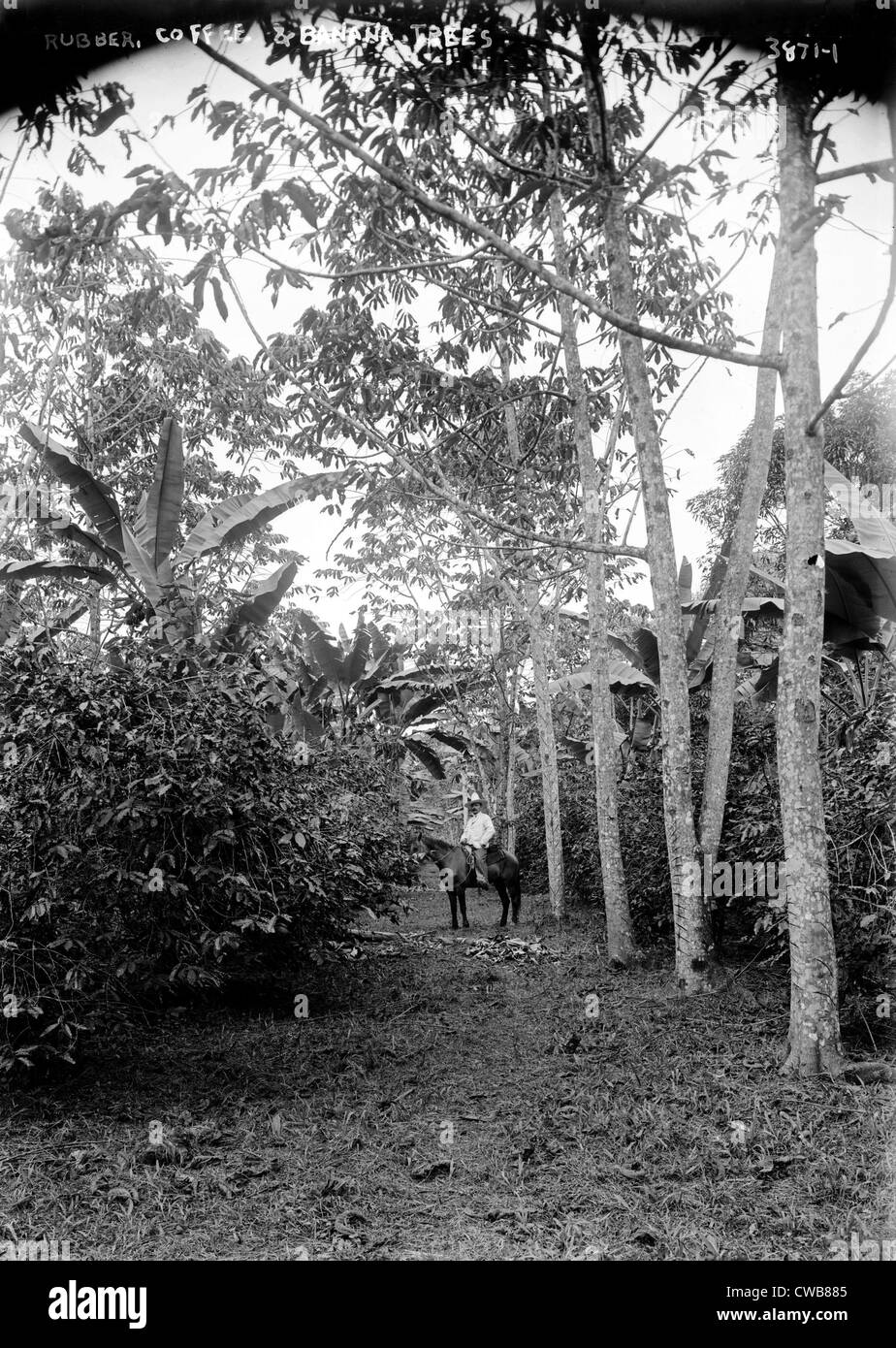 Rubber, coffee and banana trees, 1910s - Stock Image