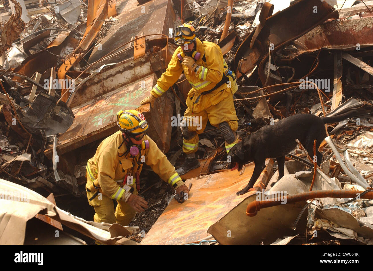 Rescue workers from the California Task Force-8 and a working dog Billy search through the rubble for victims of - Stock Image