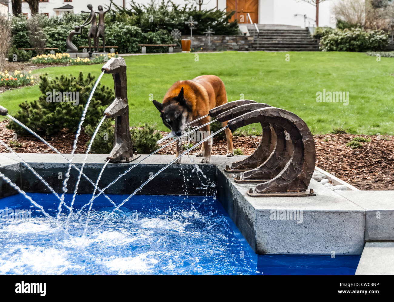 A dog drinking from a fountain - Stock Image
