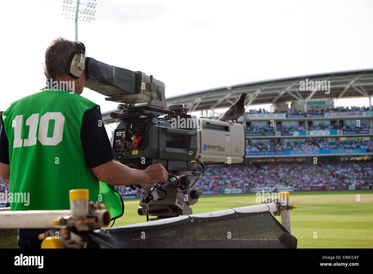 A cameraman films at the Oval England v Australia One Day International with a pigeon perching on the camera UK - Stock Image