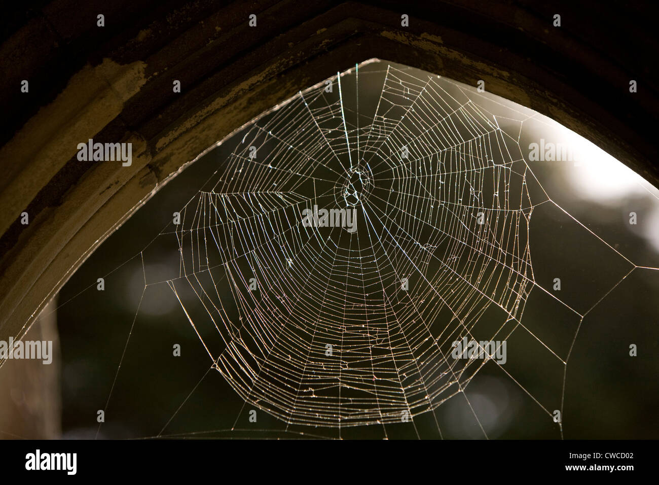 Sun lit spider web in the arch of Salisbury Cathedral, Salisbury England - Stock Image