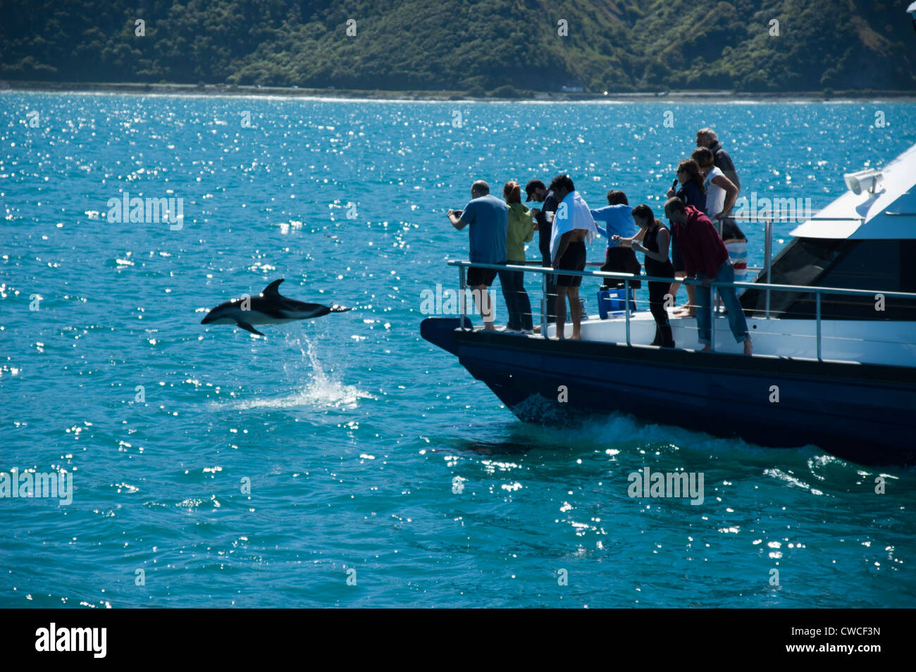 Dolphin Encounter is a tourism enterprise in Kaikoura in New Zealand offering swimming with dolphins and watching - Stock Image