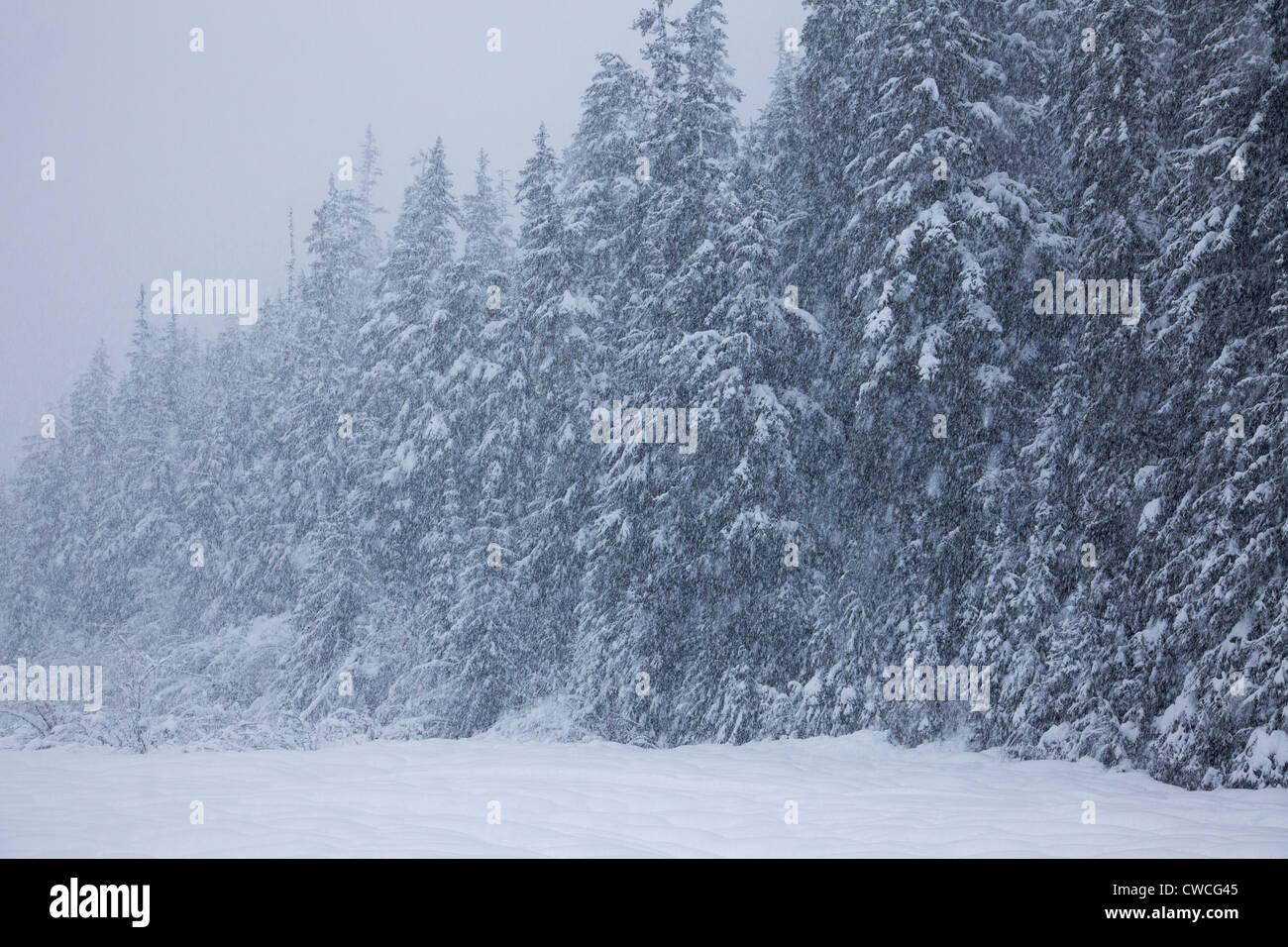 Snowy winter trees, Chugach National Forest, Alaska. - Stock Image