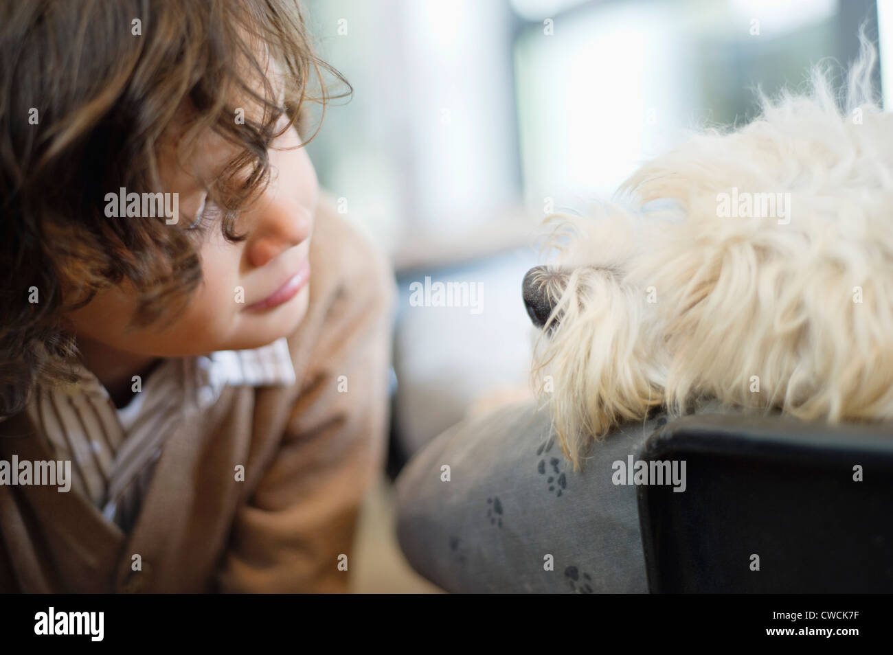 Close-up of a boy looking at a dog - Stock Image