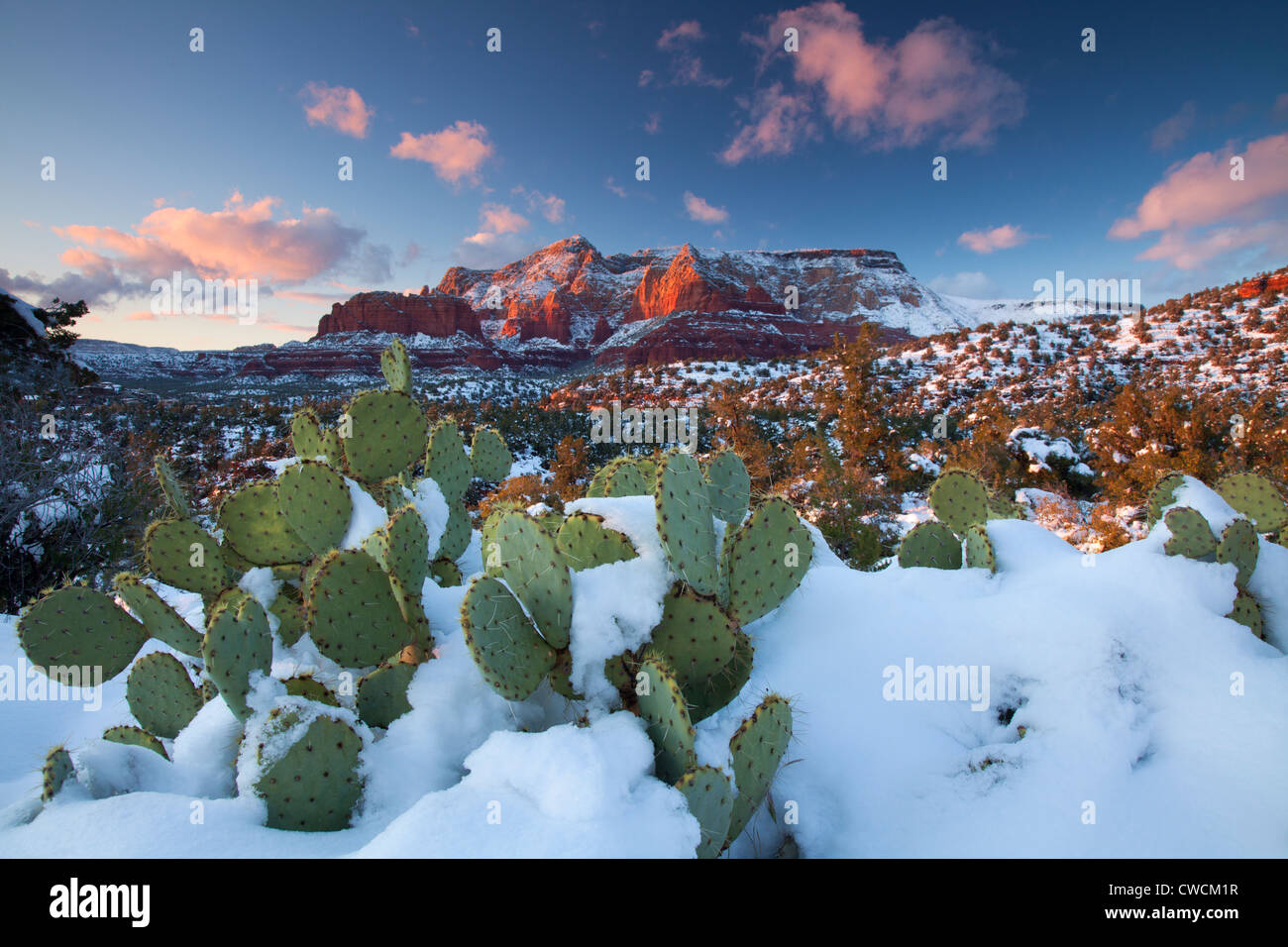 Winter snow on Schnebly Hill, Coconino National Forest, Sedona, Arizona. - Stock Image