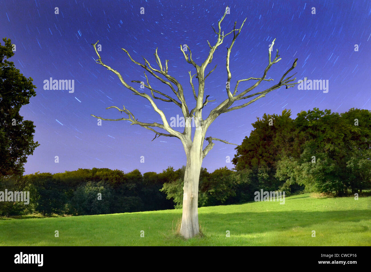Digital composite of a dead tree taken at both day and night. WIth star trails and green fields. Stock Photo